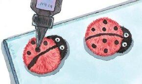 Have fun making ladybug crafts.