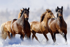 It's cool, although highly morbid, to imagine a herd of horses flash-freezing in a lake. But is that even possible?