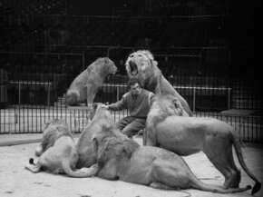 Trainer Joe Clavall, aka Tarzan, sits amidst some of his 12 Atlas lions and lionesses, while they rehearse for a show by Jack Hylton's circus at Earl's Court in London.