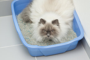 Why do some cats love their litter box and others hate it? See more cat pictures.