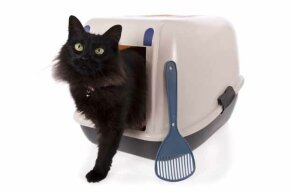 Some cats like the cosiness of a covered litter box. However, they trap odors inside, so be vigilant about cleanup.
