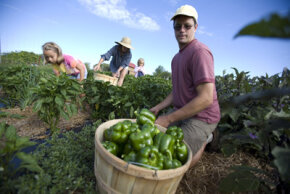 Robert Nickelsberg/Getty Images                              Is it better to buy organic or local produce? Farmers at EcoVillage in Ithaca, New York grow organic food for the                                            local community.