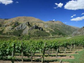 The Marlborough region is the leading wine-producing area in New Zealand. See our collection of wine pictures.
