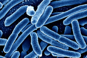 Can we pit good bacteria against the bad ones? We can, even though it might not be in the way you'd think.