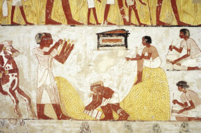 This fresco from the tomb of Menna, from the XVIII dynasty of Amenhotep III (1402-1364 B.C.E.) shows some corn being reaped. Corn has been genetically modified for thousands of years.