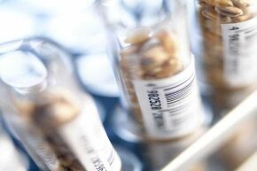 Wheat grains in test tubes labelled with barcodes. Wheat contains gluten, which many people are allergic to.