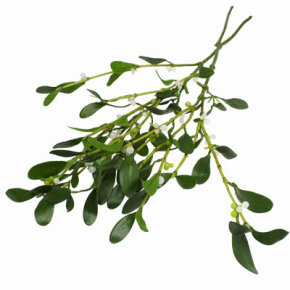 "The word ""Mistletoe"" is derived from the Old English words, ""mistel"" (dung) and ""tan"" (twig). The plant is thought to be named after bird droppings on a branch. See pictures of Christmas trees."