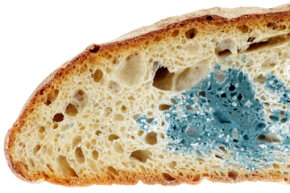 Mold makes bread and other baked goods generally unsafe to eat.