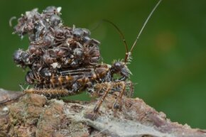 That's a rather gnarly backpack, assassin bug.