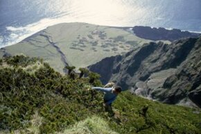A man climbs among stumpy tree ferns above Hottentot Gulch, Tristan da Cunha Island. See more pictures of beaches.
