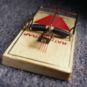 Close-up of a mousetrap
