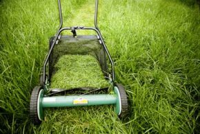 Image Gallery: Green Living Grass clippings account for up to 20 percent of household solid waste collections every year. See more green living pictures.