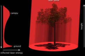 LIDAR instruments measure tree height by bouncing laser light off the tree canopy; they also measure movements in the Earth's crusts.