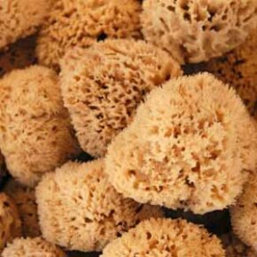 Natural sea sponges are a product of the ocean and can be used to scrub the skin soft.