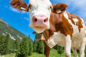A world without cows means less methane, but it also means no beef (or fewer cute creatures if you're a vegetarian).