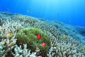 What would happen if all the coral reefs disappeared? The outlook is pretty grim.
