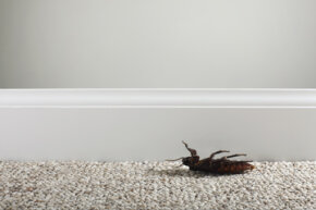 You might not want to curse the cockroach if you like trees and small critters.