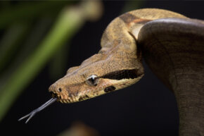 Snakes can be pretty creepy, but they tend to stay out of your house more than the mice they eat.