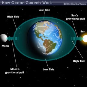 The gravitational pull of the moon usually creates two high tides and two low tides each day.