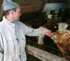 Organic farmer Johann Schaffer greets one of his organically raised cows on his farm in Arnbruck, Germany. Demand for organic products has increased in the wake of food-industry related scares like mad cow disease.