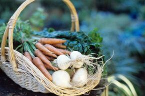 Go green while saving green! See more vegetable pictures.