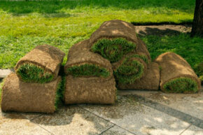 Is your lawn in complete disrepair? These tips will help you get a fresh start.