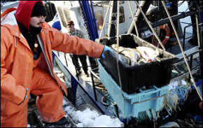 Consumer Guide to Overfishing