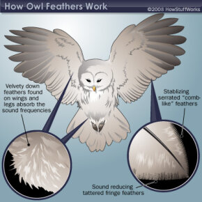 Illustration of owl feathers
