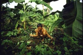 A Yanomami Indian weeds a forest garden in the Amazon, illustrating how permaculture practices existed long before the term itself.