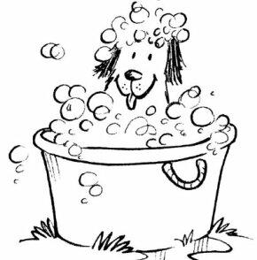Dog wash pet activity