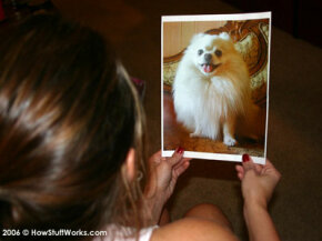 Pet psychics often work from a photo of the animal.