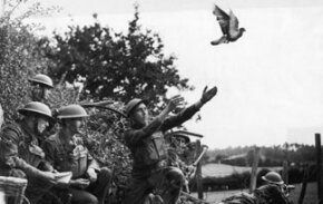 Cher Ami rescued a lost American battalion during World War I with its messages.  In World War I, the Germans effectively used pigeons as spies, attaching small cameras to the birds and setting them to take pictures over enemy territory at certain times.