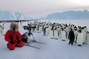 A BBC cameraman spends some quality time with the emperor penguins of Antarctica.