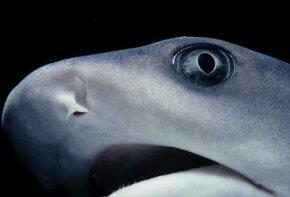 Close-up of shark