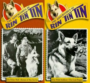 Hollywood star Rin Tin Tin is perhaps the most famous police dog.