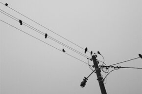 Birds perch on a power line. Notice that there are three wires coming from the pole.