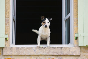 No need to trade in Fido for a large guard dog. Even little dogs can alert the neighbors that someone is prowling near your house.