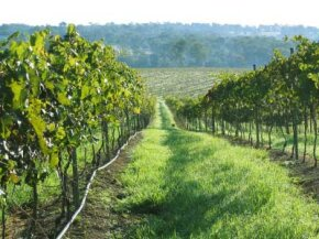 Australia's Queensland has been producing a variety of wines for more than 100 years. See more wine pictures.