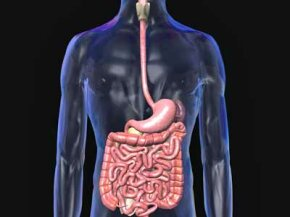 How does your stomach protect itself from its own acid? See more bodily organ pictures.