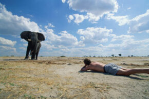 A safari participant lines up a dramatic camera shot of an elephant in Africa.