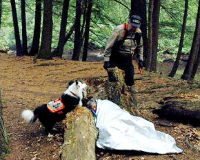 Tracking dogs are most useful in wilderness searches.
