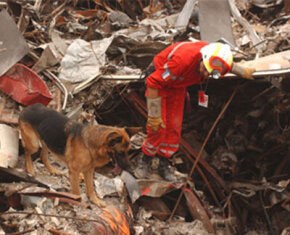 A member of the French Urban Search and Rescue Task Force works with his Alsatian to uncover victims at the site of the collapsed World Trade Center.