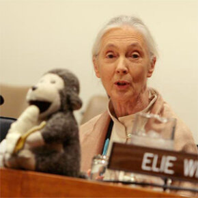 If the stuffed monkey didn't already give it away, that's Jane Goodall, a scientist who has made room for both science and religion in her life.