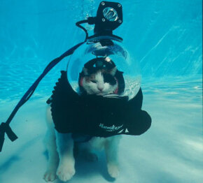 "From the Scuba Cat photo essay: ""World, Just Leave Me Alone."""