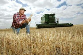 An Australian wheat farmer examines his crop, which has been weakened by drought. See more vegetable pictures.