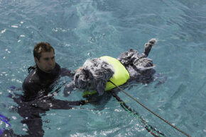 """Tory Bellici, of Discovery Channel's """"MythBusters,"""" assists RoboDog, the robotic dog used on the show to test whether sharks like to eat dogs."""