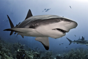 Unprovoked shark attacks are extremely rare, but it pays to know about these much-feared ocean dwellers.
