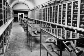 Museums, like this one in Pompeii, Italy, are under increasing pressure to repatriate the remains of humans held in collections and exhibited on display.