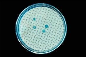 Coliforms are organisms often found in animal and human feces, as well as on soil and plants