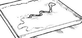 Learn how snakes move by studying their tracks.